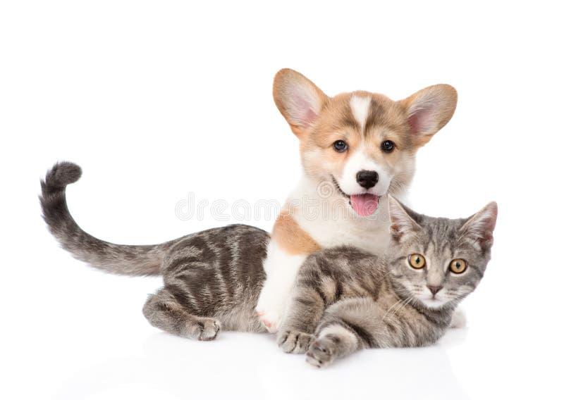 Cucciolo di Pembroke Welsh Corgi che abbraccia gatto Isolato su bianco fotografia stock libera da diritti