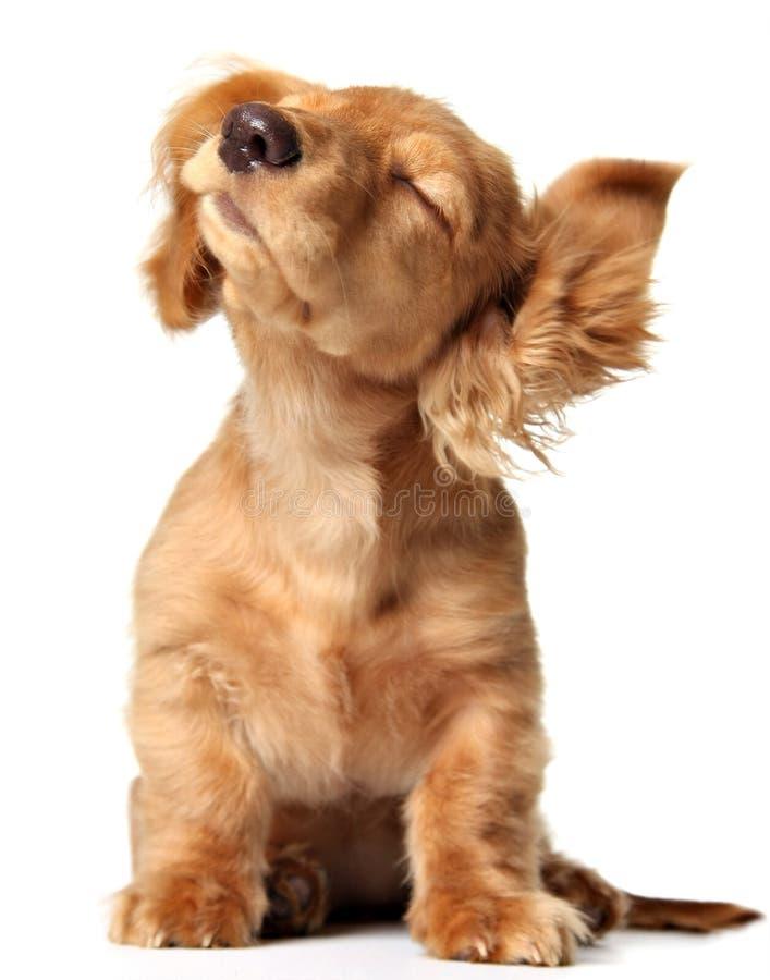 Cucciolo divertente fotografie stock libere da diritti