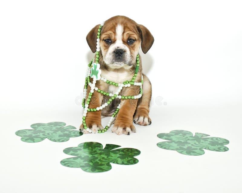 Cucciolo divertente di giorno della st Patricks fotografie stock libere da diritti