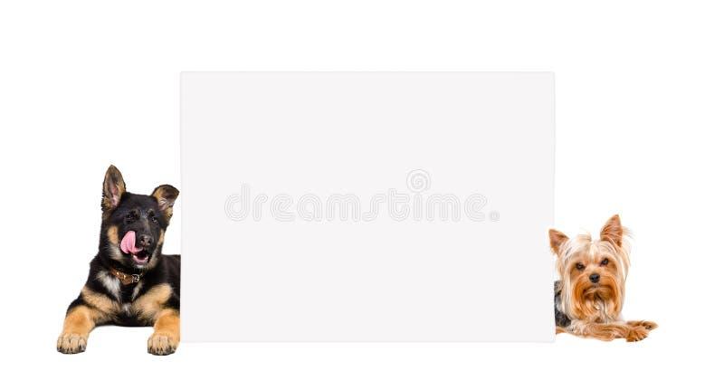 Cucciolo e Yorkshire terrier del pastore tedesco, trovantesi da dietro l'insegna immagini stock libere da diritti