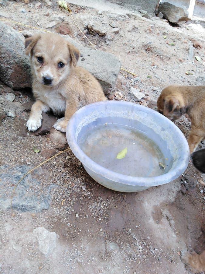 Cucciolo gentile del cutelook del piccolo cane del cucciolo immagine stock libera da diritti