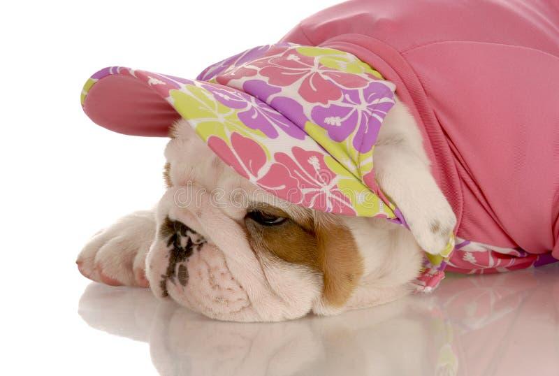 Cucciolo inglese femminile del bulldog fotografia stock libera da diritti