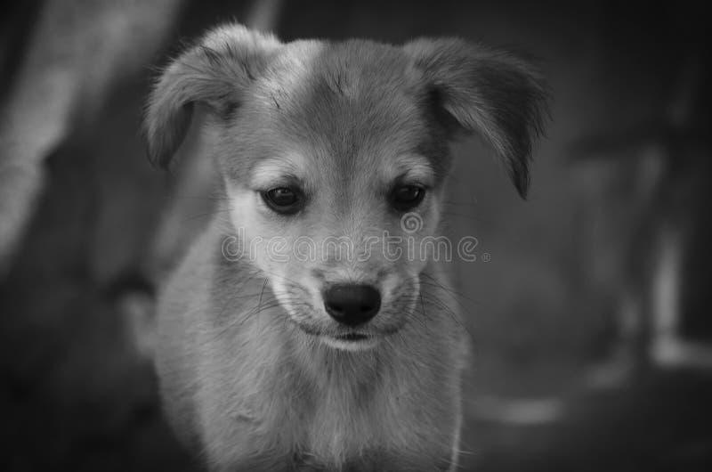 Cucciolo minuscolo che guarda i vostri amici fotografie stock libere da diritti