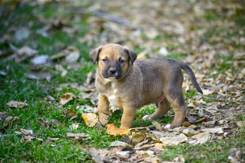 cucciolo misto sveglio della razza con la deformità immagine stock