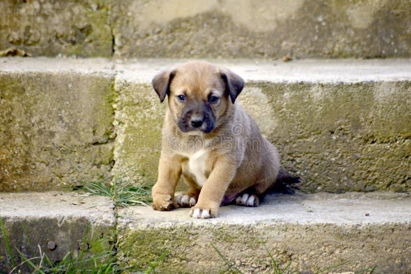 cucciolo misto sveglio della razza con la deformità immagini stock
