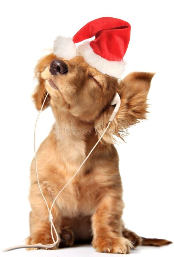Cucciolo musicale di Natale immagini stock