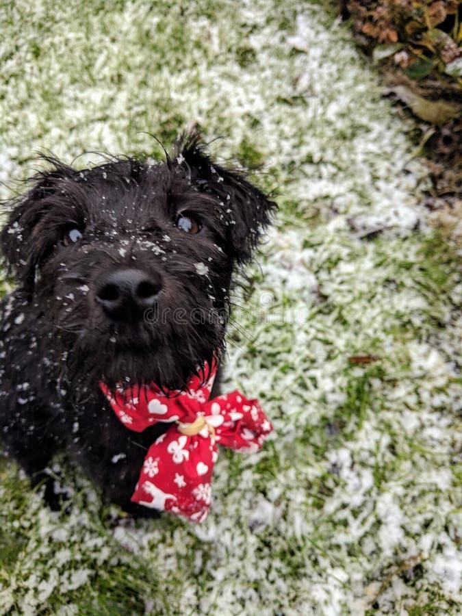 Cucciolo in neve fotografie stock