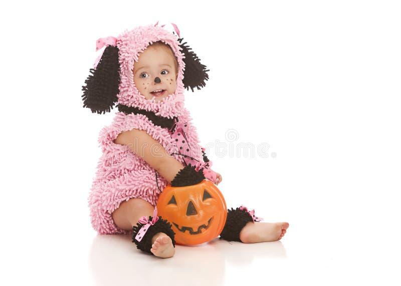 Cucciolo rosa fotografie stock