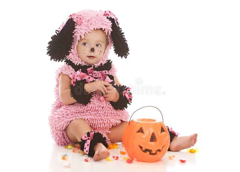 Cucciolo rosa immagini stock