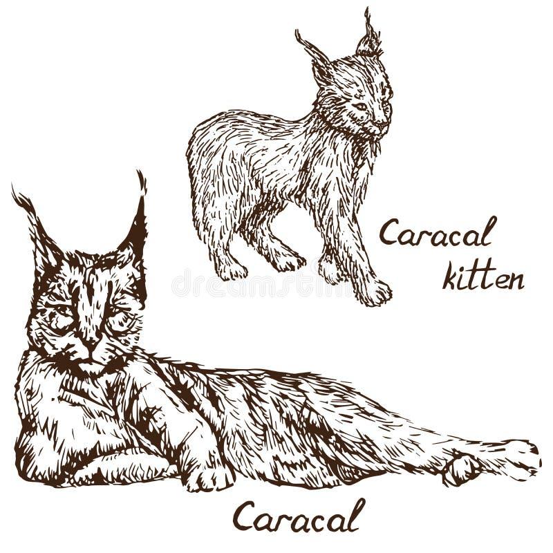 Cucciolo rosso o persiano rosso del gatto, del rooikat, di Caracal del lince e del gattino illustrazione vettoriale