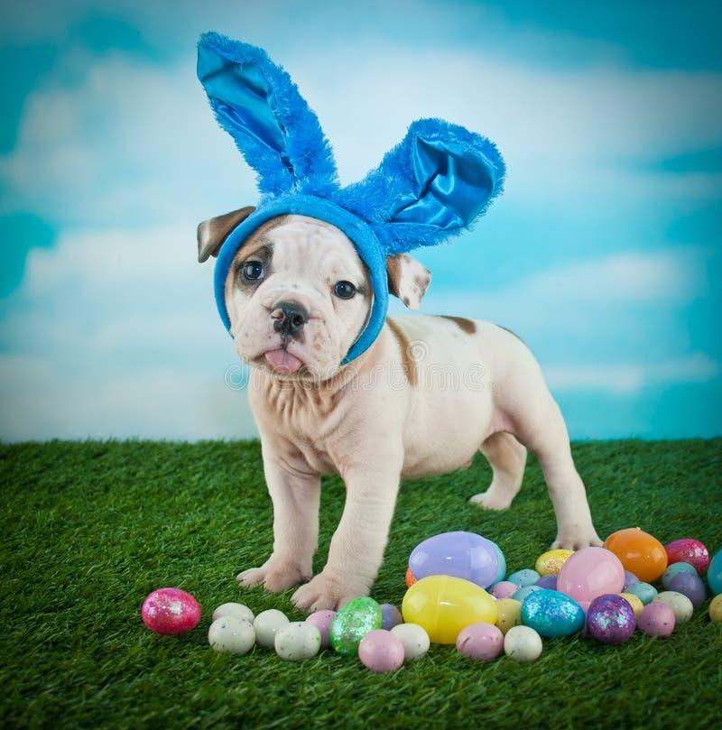 Cucciolo sciocco del bulldog di Pasqua fotografie stock libere da diritti