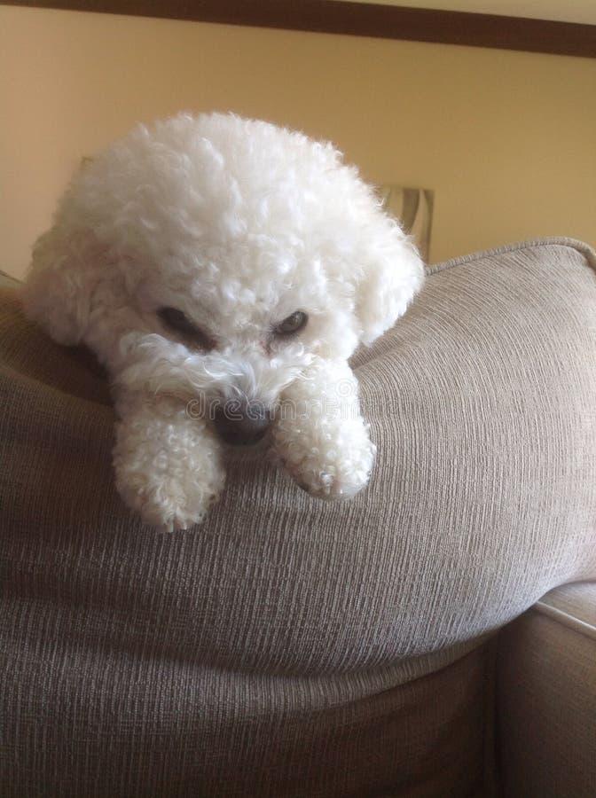 Cucciolo sporgente le labbra! fotografie stock