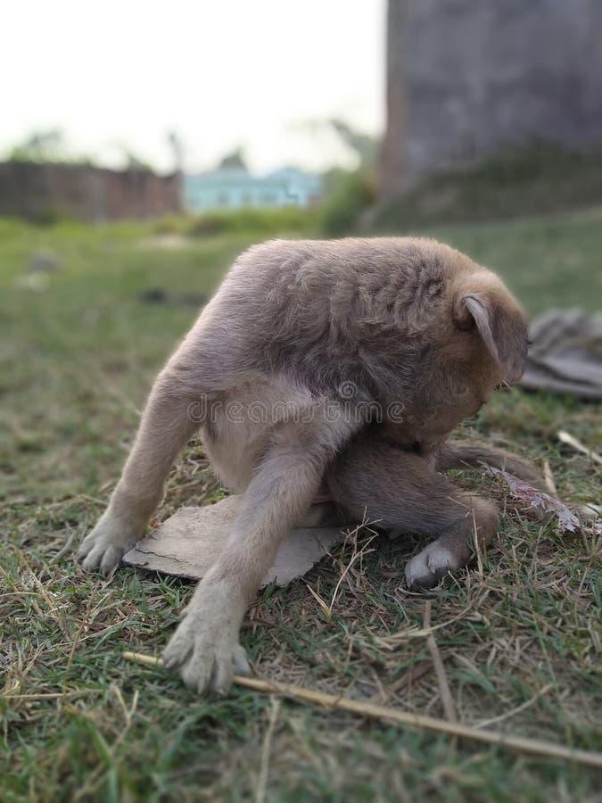 Cucciolo sveglio 3 fotografia stock libera da diritti