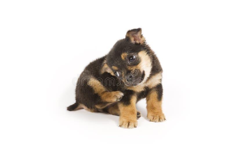 Download Cucciolo sveglio immagine stock. Immagine di animale, mixed - 7307785