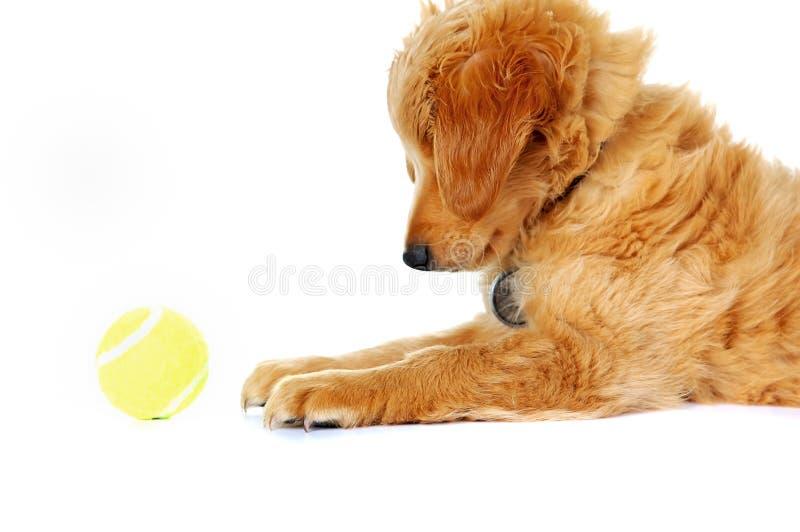 Cucciolo sveglio che gioca sul bianco fotografia stock libera da diritti