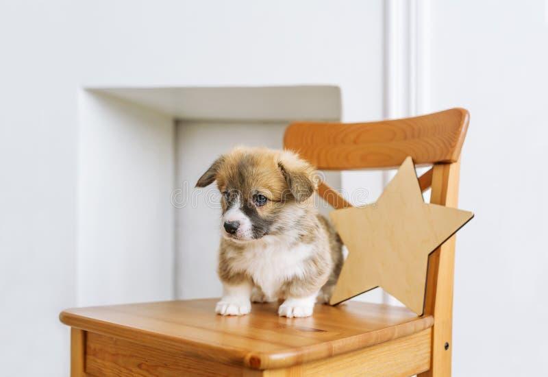 Cucciolo sveglio che si siede su sulla sedia di legno fotografie stock libere da diritti