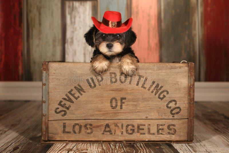 Cucciolo sveglio di Yorkie del tazza da the in contesti adorabili e puntello per Cale immagini stock libere da diritti