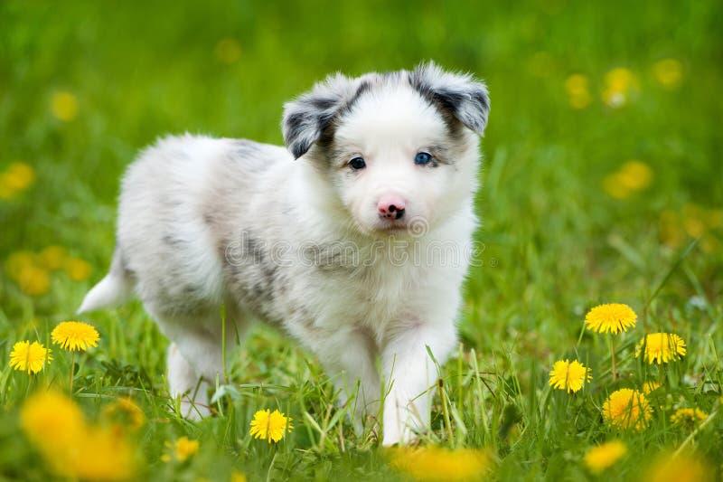 Cucciolo in un prato fotografia stock
