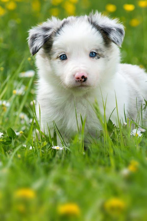 Cucciolo in un prato fotografie stock