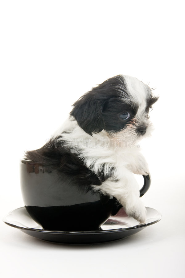 Cucciolo in una tazza fotografia stock