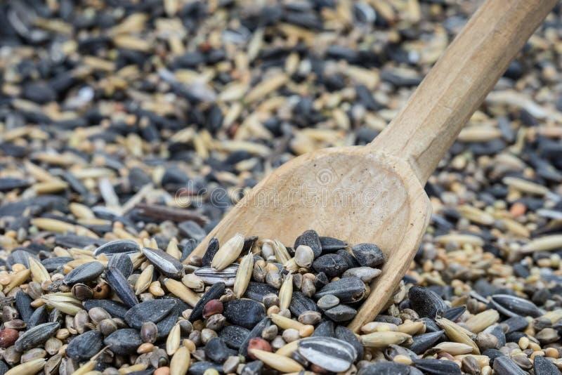 Cuchara en semilla del pájaro fotos de archivo libres de regalías