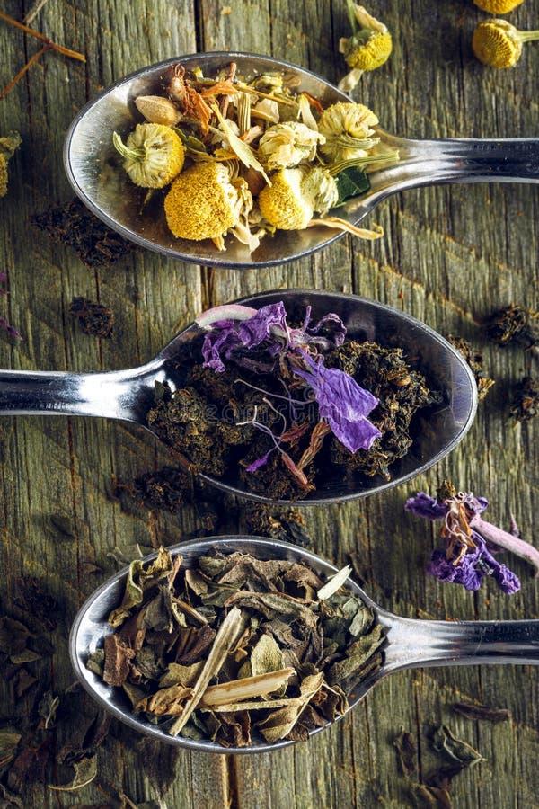 Cucharas del té de la manzanilla, de la hierbabuena y del laurel de San Antonio foto de archivo libre de regalías