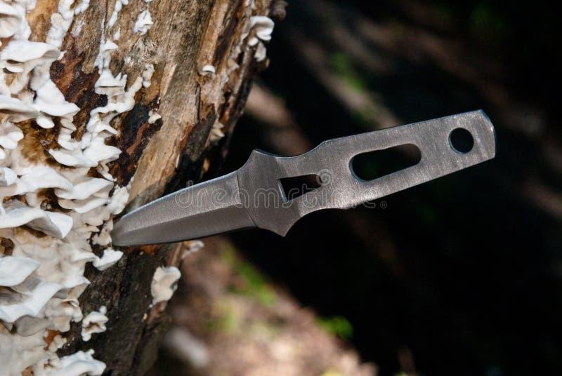 Cuchillo que lanza fotografía de archivo libre de regalías