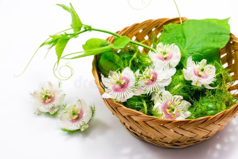 Cuchnący passionflowers na bielu zdjęcia royalty free