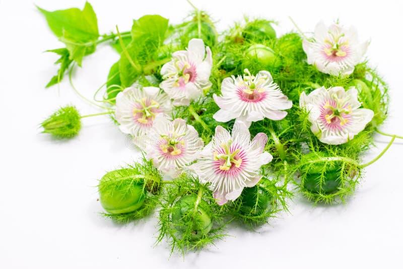 Cuchnący passionflowers na bielu fotografia royalty free