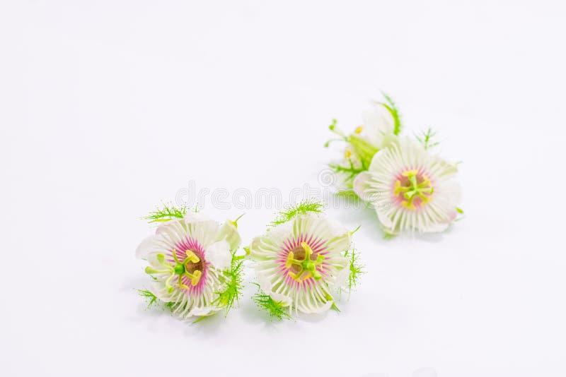 Cuchn?cy passionflowers na bielu obraz stock