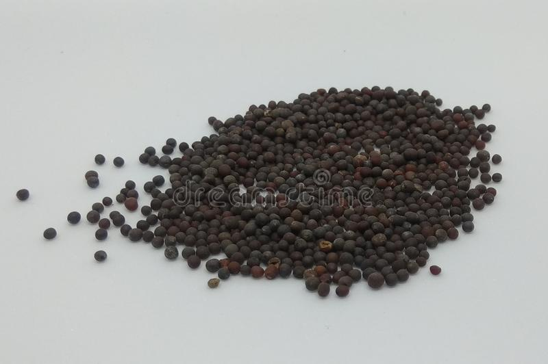 Cucina indiana, ingredienti alimentari semi di senape fotografia stock