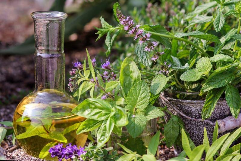 Cucinando ed omeopatia con le piante medicinali fotografia stock libera da diritti