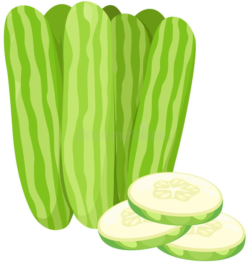 Download Cucumber stock vector. Image of plant, botany, clip, nutrition - 24338831