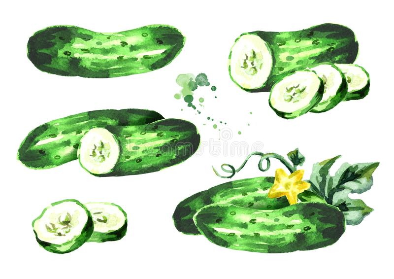 Cucumber composition set. Watercolor hand drawn illustration, isolated on white background.  stock illustration