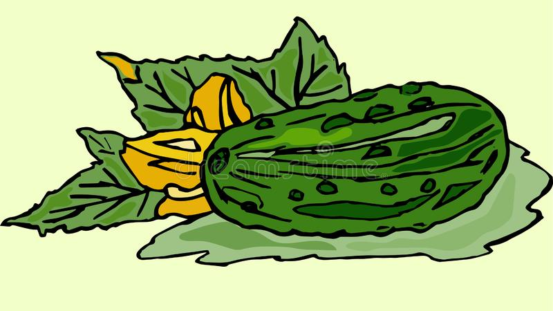 Cucumber green with leaves, vector royalty free illustration