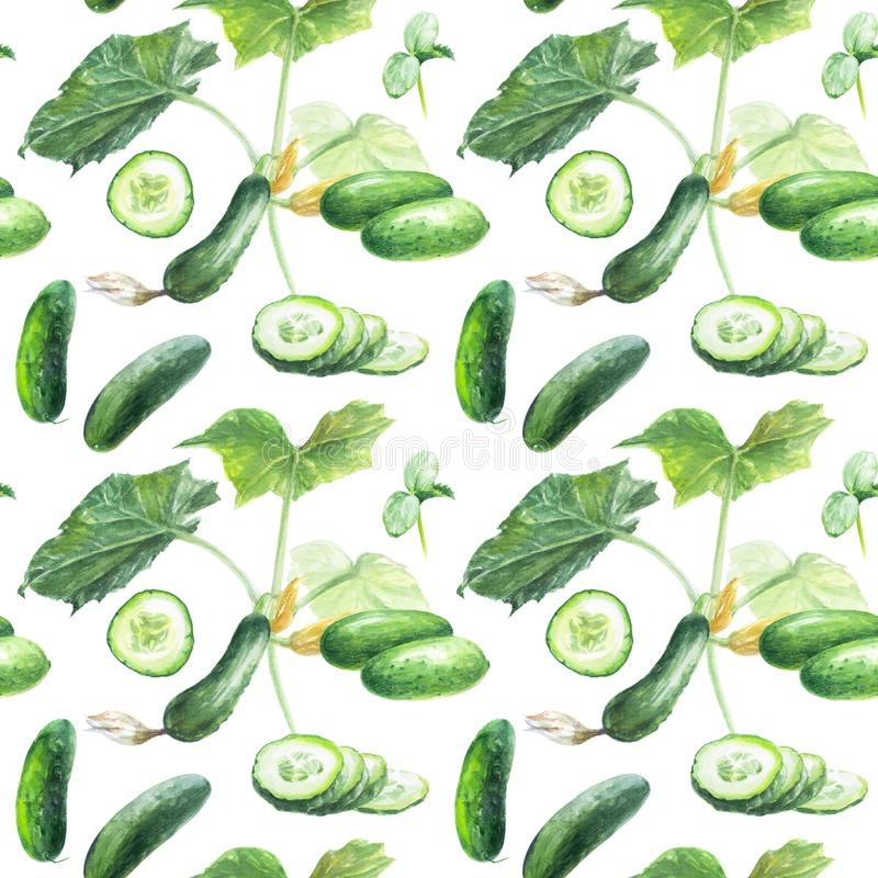 Cucumber hand draw seamless watercolor fabric pattern. Cucumber seamless pattern. Hand draw watercolor illustration isolated on white background royalty free illustration