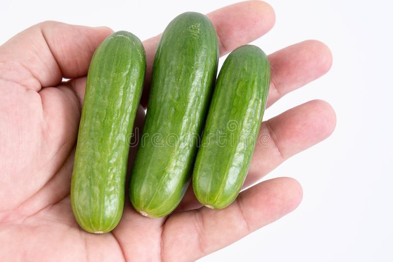 cucumber in the hands stock photography