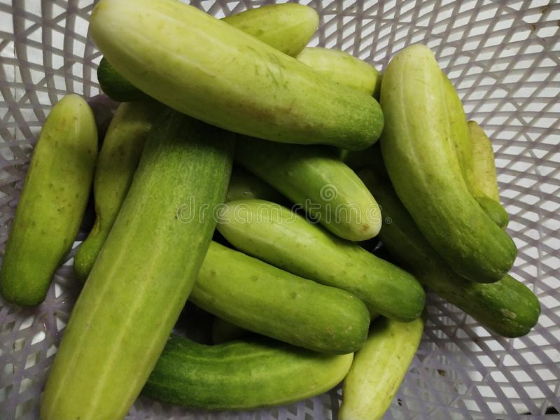 Cucumber or melon shop is a ivy in the family.  Cucurbitaceae  Originated in India stock photography