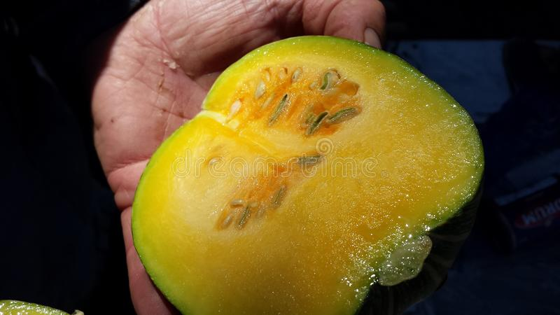 Cucumber Pumpkin stock images