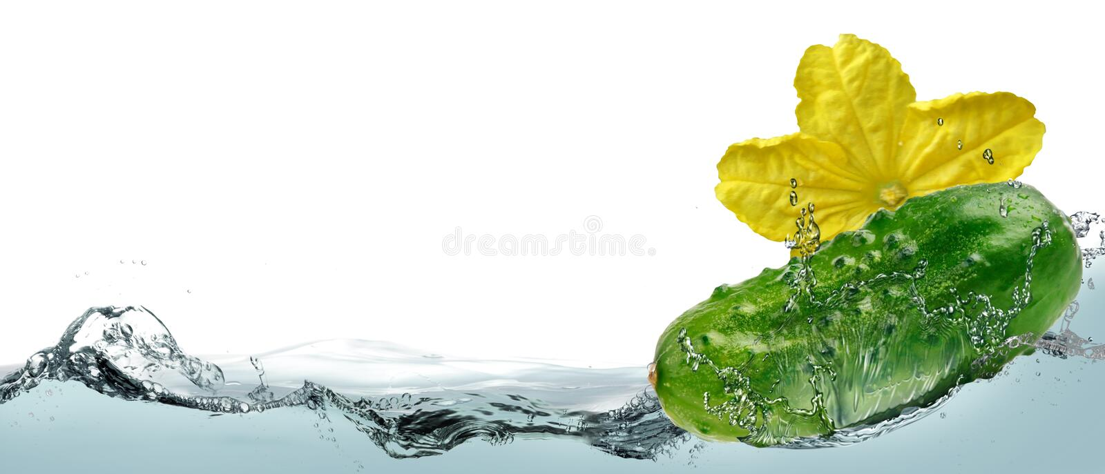 Cucumber in the spray of water. stock photography
