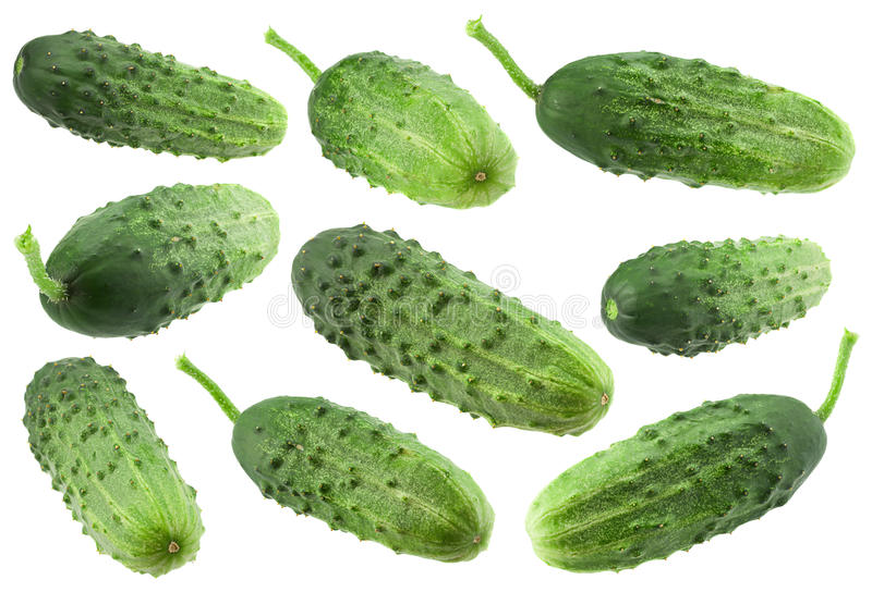 Cucumber vegetable collection on white royalty free stock images