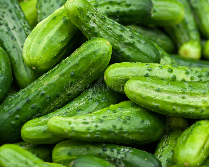 Download Cucumbers stock photo. Image of green, pickle, greens - 15918072
