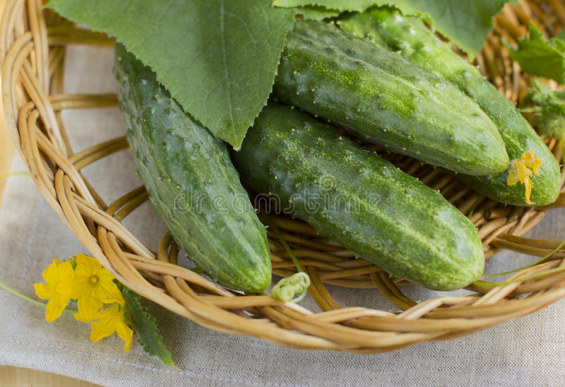 Cucumbers in a basket stock photo