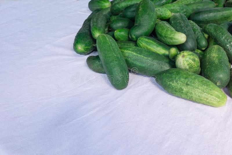 Cucumbers closeup image. Pile of green vegetables perspective view with copy space. Summer harvest or organic diet food stock photo