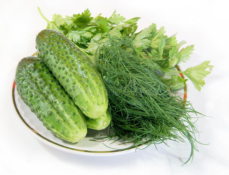 Download Cucumbers, Fennel And Parsley Stock Photo - Image of food, white: 17020254