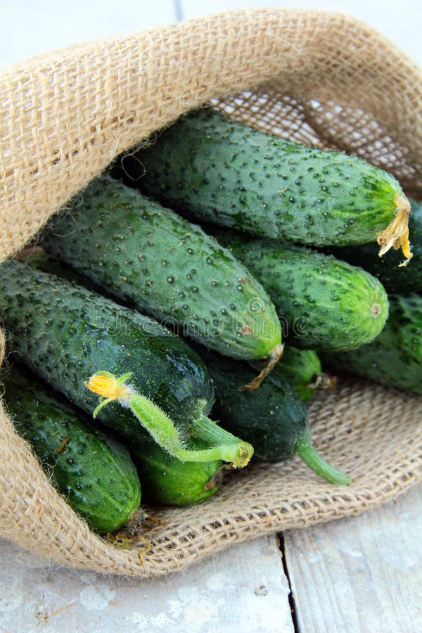 Download Cucumbers in a linen bag stock image. Image of ripe, eating - 19605669