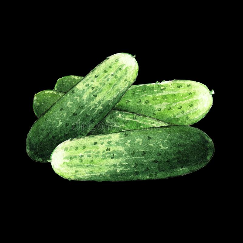 Cucumbers watercolor illustration on black background stock illustration