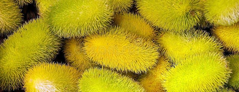 Cucumis anguria, cackrey, wałkoni się ogórek, Zachodniego Indiańskiego korniszonu i Zachodniej Indiańskiej gurdy, owoc kolor żółt obrazy stock