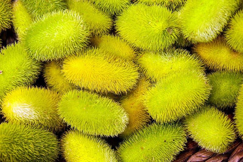 Cucumisanguria, cackrey, kastanjebruine komkommer, het Westen Indische augurk en het Westen Indische pompoen Deco-fruit gele en g stock foto