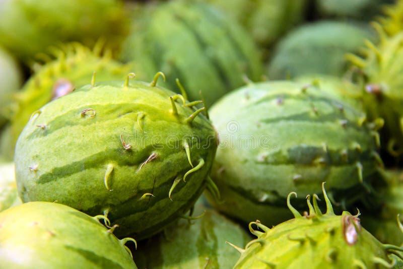 Cucumisanguria, cackrey, kastanjebruine komkommer, het Westen Indische augurk en het Westen Indische pompoen Deco-fruit gele en g royalty-vrije stock fotografie